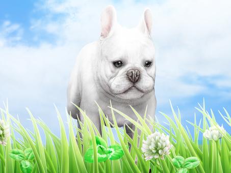 Grass Hakuzo grass blue sky puppy bulldog background 2