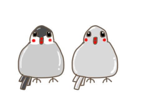 Two sentenced birds