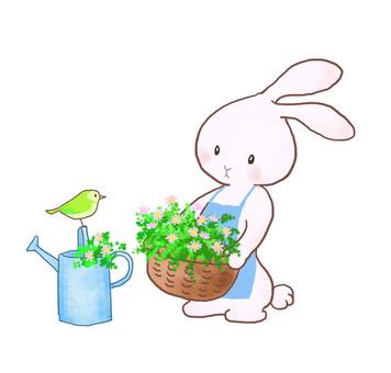Spring rabbit 5