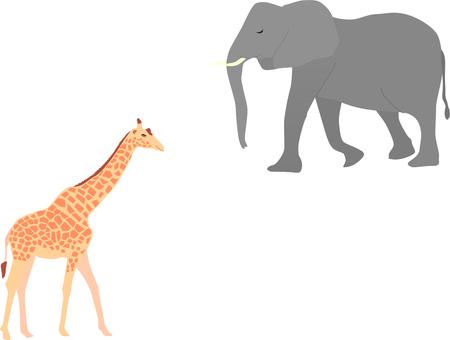 Giraffe and an elephant
