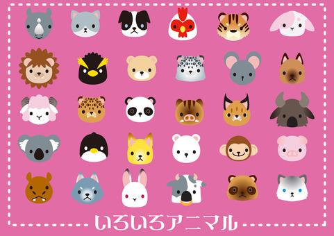 여러 가지 동물