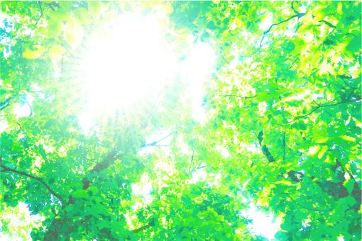 在森林裡06