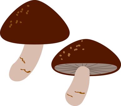 Food Series Vegetables - Mushrooms Shiitake