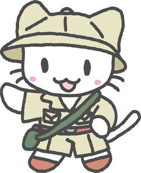 Exploration cat