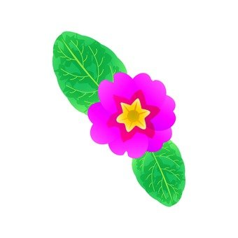 Pink Sasanqua