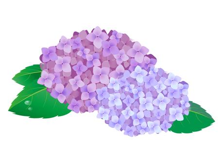 수국 꽃 5