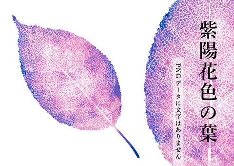 잎맥이있는 잎 수채화 일러스트 수국 색