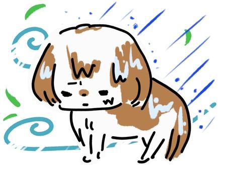 Typhoon heavy rain wind