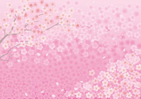 벚꽃의 프레임 7