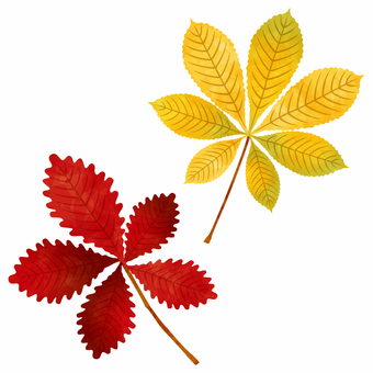 Autumn leaves / cinnamon tree / octopus