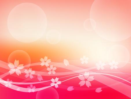 Sakura Bibbit