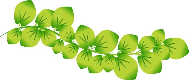 Green foliage plant
