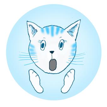 Cat surprised