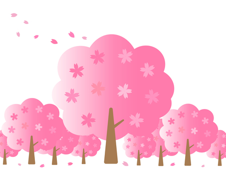 Cherry tree and cherry blossom petal background material
