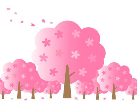 벚꽃 나무와 벚꽃의 꽃잎 배경 소재