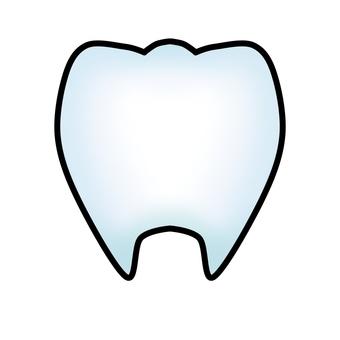 치아 (윤곽선 있음)