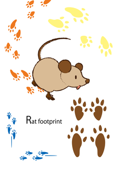 Rat footprints