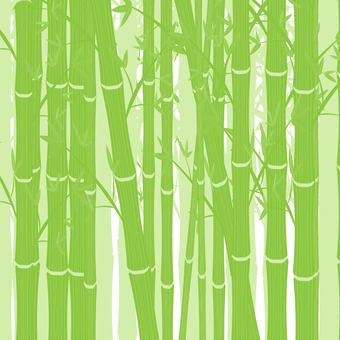 Bamboo forest ②