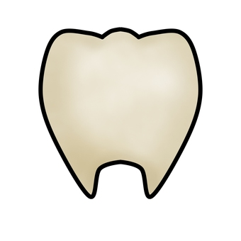 누르스름 한 치아 (윤곽선 있음)