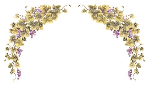 Grape illustration frame 08-1 (white line)