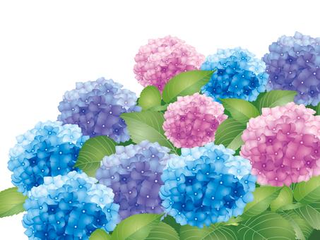 A hydrangea group