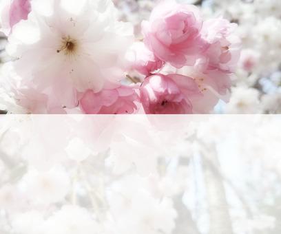 Flower message card 8-B