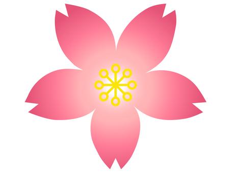 Sakura Gradient