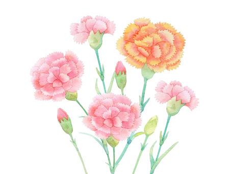 Carnation 02 0458-F