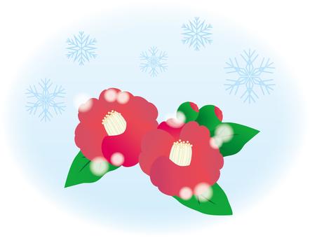 Tsubaki flower winter