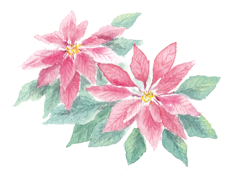 Clematis drawn with transparent watercolor