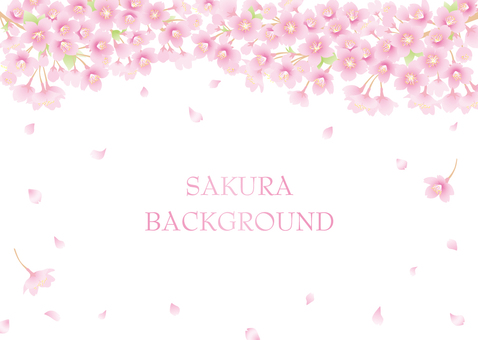 Cherry blossom background 01