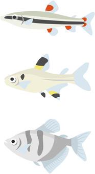 Tropical fish pencil etc
