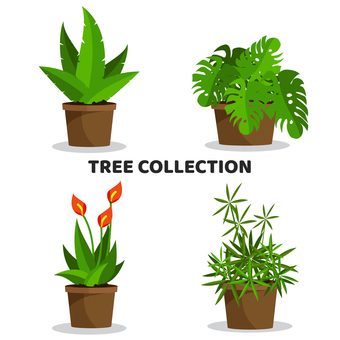 Potted plant collection
