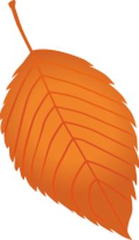 Leaves of autumn leaves