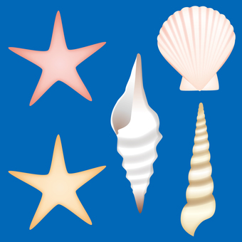 Illustration of a shell