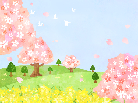 벚꽃과 유채 꽃의 풍경 01