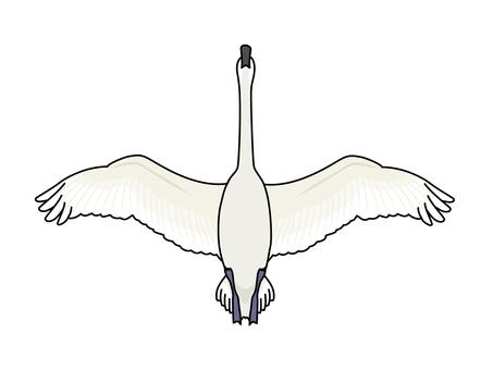 Swan (Swan) 4