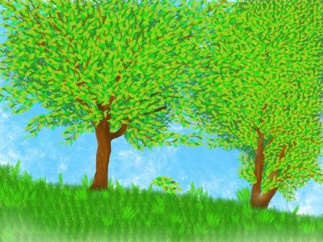 樹自然風景藍天