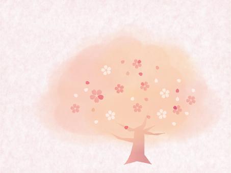 봄의 풍경 ~ 벚꽃 나무 ~