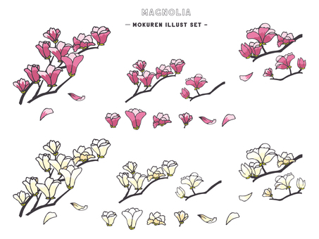 Magnolia illustration set