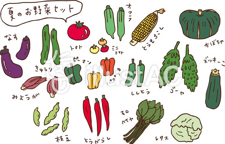 夏のお野菜セット  カラーのイラスト