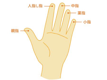 손가락의 명칭 2