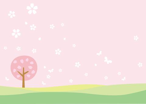 Cherry blossom background _ One cherry tree 02