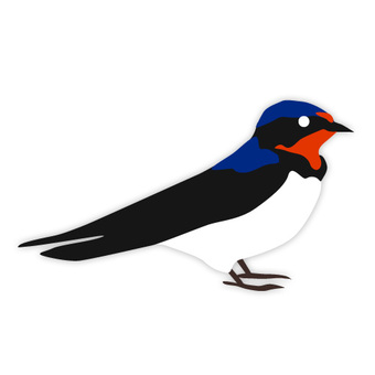 Swallow (familiar bird)