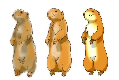 Prairie dog by picture