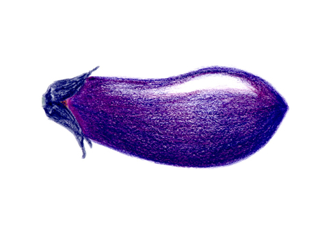 Eggplant colored pencil drawing