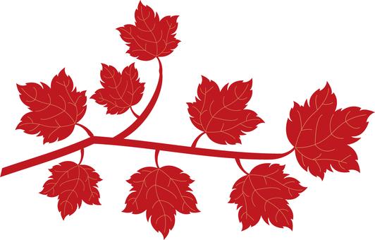 Autumn leaves 08