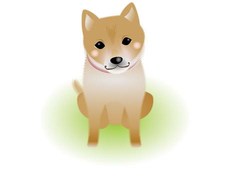 Shiba Inu with a Hilarious Eyes