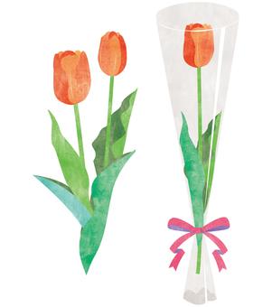 Tulip (Orange)