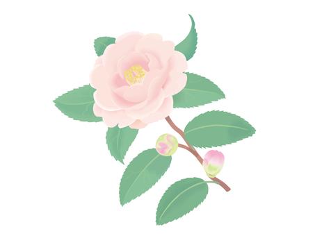 Pink camellia 2